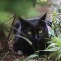 写真: ジャングルにゃんこ