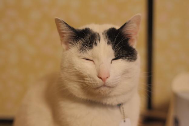 写真: 大仏顔