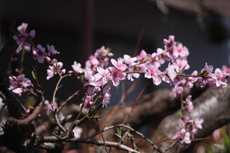 隣のお花で花見だよ
