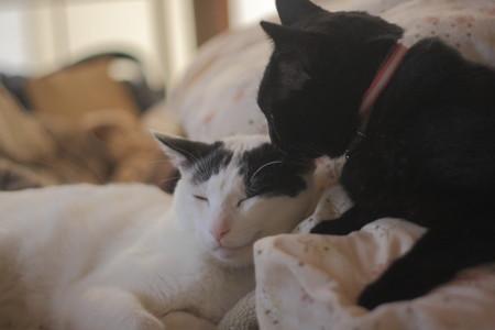 大人猫仲良しになる