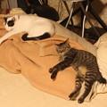 写真: シンクロ寝