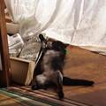 写真: 寒い季節のおっぴろげ寝