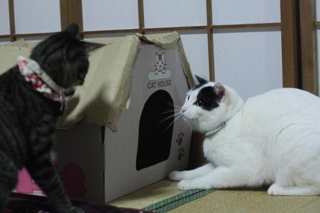 写真: ハウスを巡る争い
