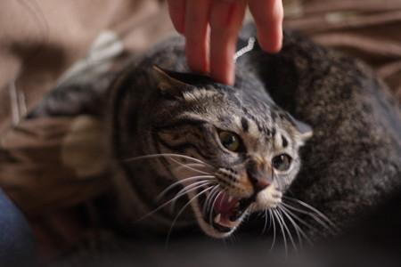 この猫危険!