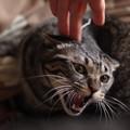 写真: この猫危険!