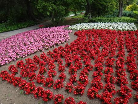 たくさんの花々 (1)