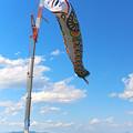 日本一の鯉のぼり1@加須・利根川