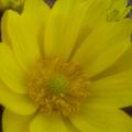 Photos: 春待ち花