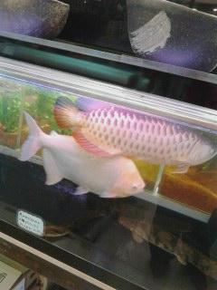 写真: 魚もゲキ写!