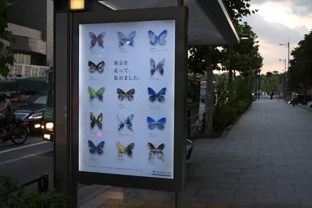 2012.07.15 有楽町 バスシェルター 東京の蝶
