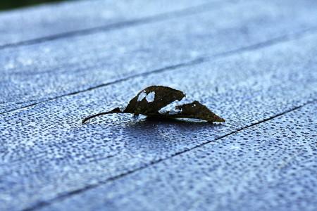 2012.09.11 追分市民の森 ベンチに枯葉