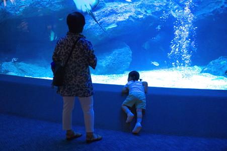 2012.09.11 東京スカイツリータウン すみだ水族館 東京大水槽