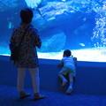 Photos: 2012.09.11 東京スカイツリータウン すみだ水族館 東京大水槽