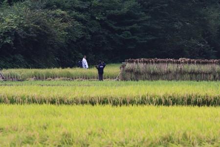 2012.09.22 追分市民の森 稲刈り