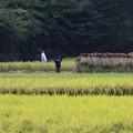 Photos: 2012.09.22 追分市民の森 稲刈り