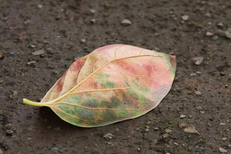 2012.09.27 和泉川 柿