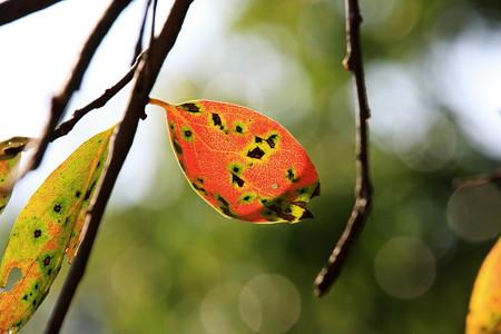 2012.10.08 和泉川 柿
