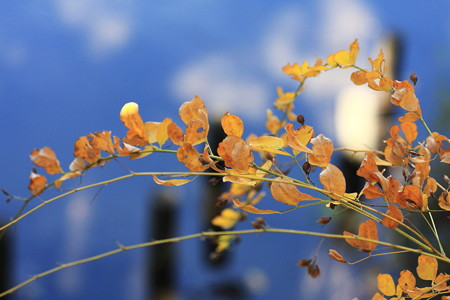 2012.11.15 和泉川 ハギ