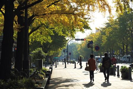 2012.11.19 日本大通
