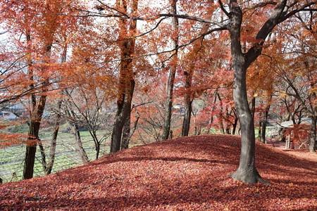 2012.11.28 安曇野 大王わさび農場 紅葉の丘から山葵田