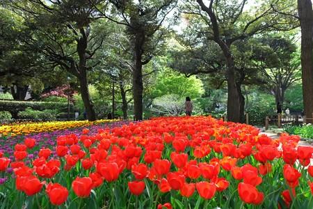 2013.04.09 横浜公園 チューリップ 赤