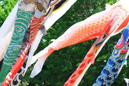 2013.05.08 和泉川 鯉幟