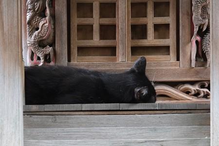 2013.07.25 元町厳島神社 祠の前は昼寝場所
