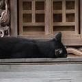 Photos: 2013.07.25 元町厳島神社 祠の前は昼寝場所