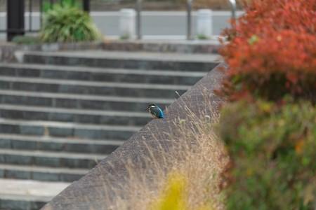 2013.11.12 和泉川 めがね橋に青