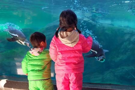 2013.12.25 zoorasia フンボルトペンギン