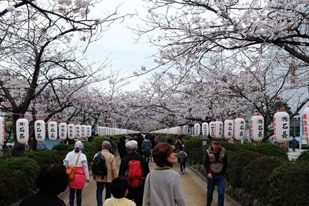 2014.04.02 鎌倉 段葛