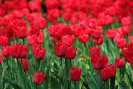 2014.04.09 横浜公園 赤