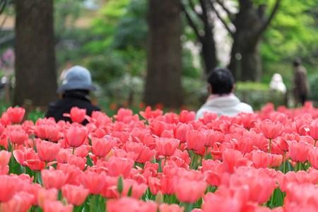 2014.04.09 横浜公園 赤いベンチ