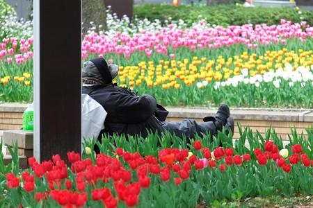 2014.04.09 横浜公園 昼寝