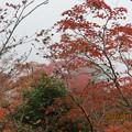 20121011 石鎚山 紅葉はきれいだけど