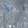 2013/1/27 八ヶ岳登山 森に別れを告げて