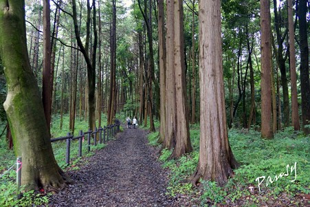 三保市民の森 035