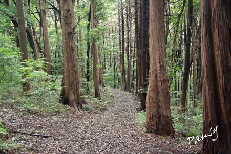 三保市民の森 054