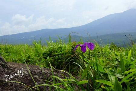 野花菖蒲の花と・・霧ヶ峰・車山高原・・6