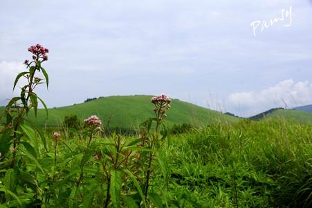 ヨツバヒヨドリの花と・・霧ヶ峰・車山高原・・7