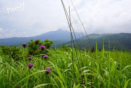 ノアザミの咲く風景・・霧ヶ峰・車山高原・・8