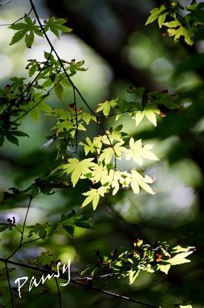 木染月の green..11