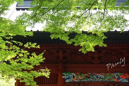 木染月の妙本寺・・4