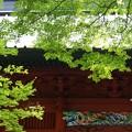 写真: 木染月の妙本寺・・4
