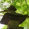 写真: 木染月の妙本寺・・5