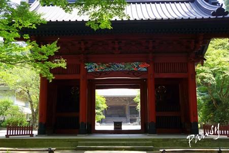木染月の妙本寺・・6