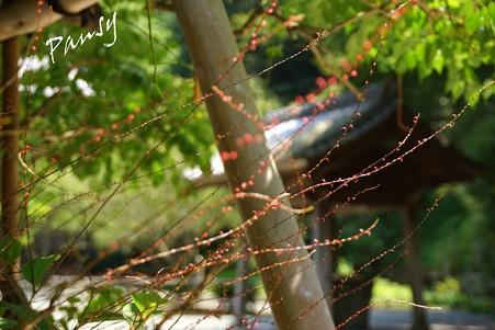 水引草と・・木染月の妙本寺・・13