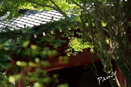 木染月の妙本寺・・17