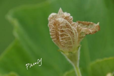 うり科の花・・1