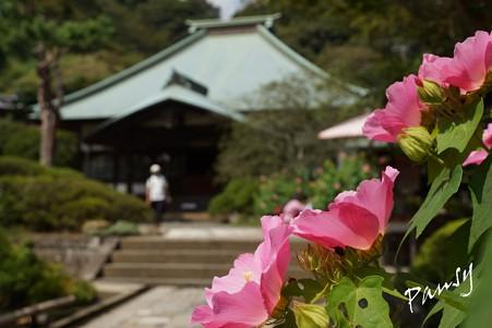 長月の海蔵寺・・2
